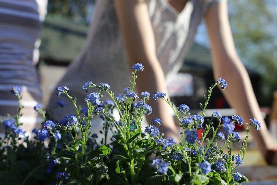 Summer Garden Greatness