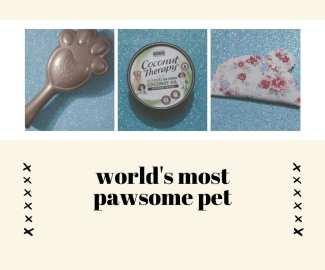 worlds-most-pawsome-pet.jpg