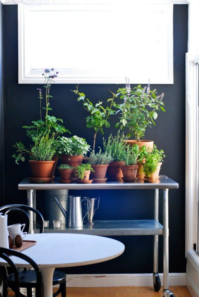 Ideje za uzgoj začinskog bilja u kuhinji