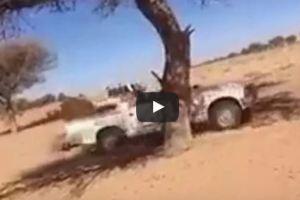 فيديو.. «شجرة» تقاوم الاحتطاب في الصحراء تهوي بمركبة بشدة
