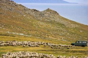 معالم واماكن السياحة في جزر فوكلاند