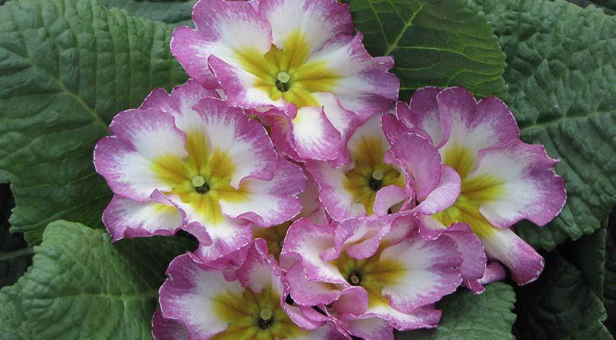 Intratuin: 'Praten tegen je planten kan geen kwaad.'