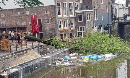Veel bomen hebben storm vannacht niet overleefd