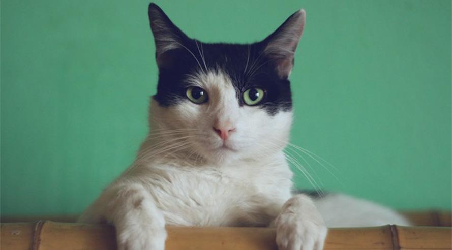 5 plekken die perfect zijn voor kattenmensen op dierendag!