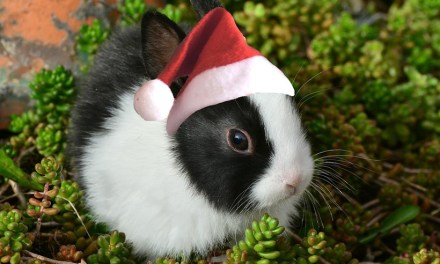 De beste Amsterdamse kerstmuziek!