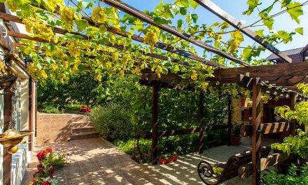 Intratuin: De mediterrane tuin van Johan Cruijff