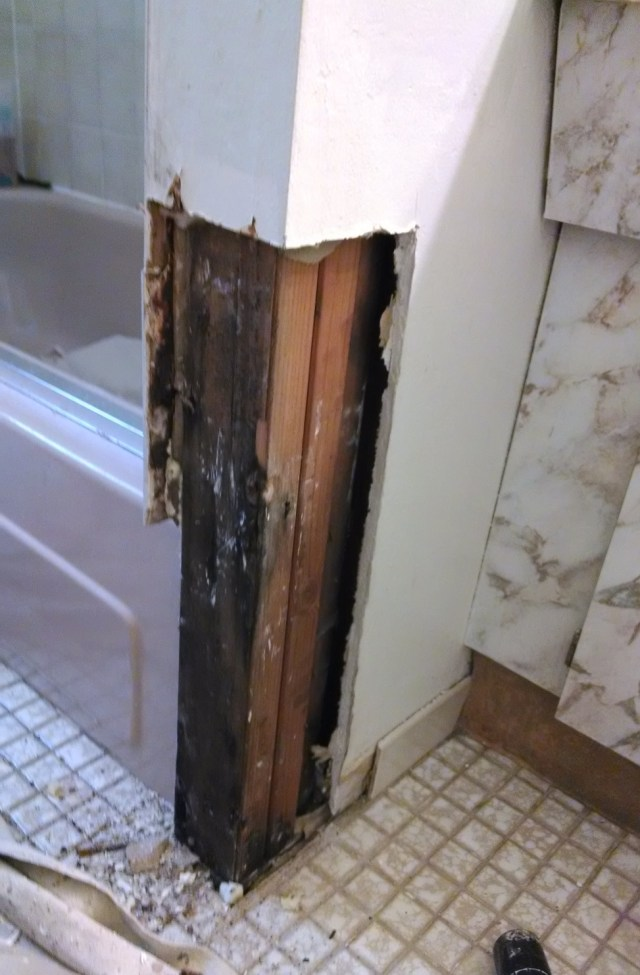 9+ Pictures of Mold in the Home