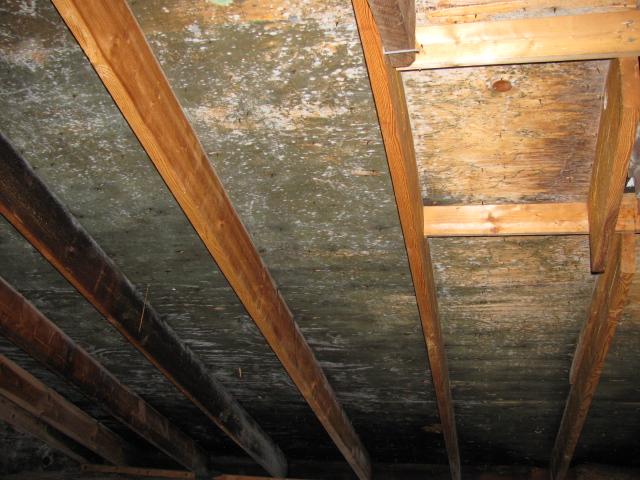 How To Treat Mold On Attic Ceiling Www Energywarden Net