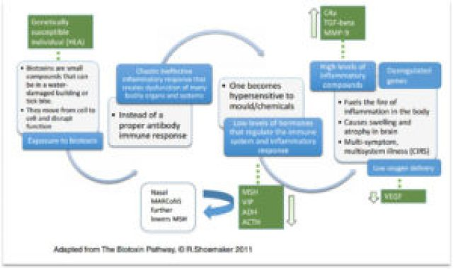 The biotoxn pathway made simple