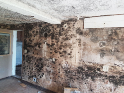 mold in finished basement