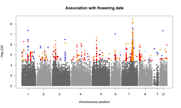 A Manhattan plot from a GWAS of flowering time in Medicago truncatula.