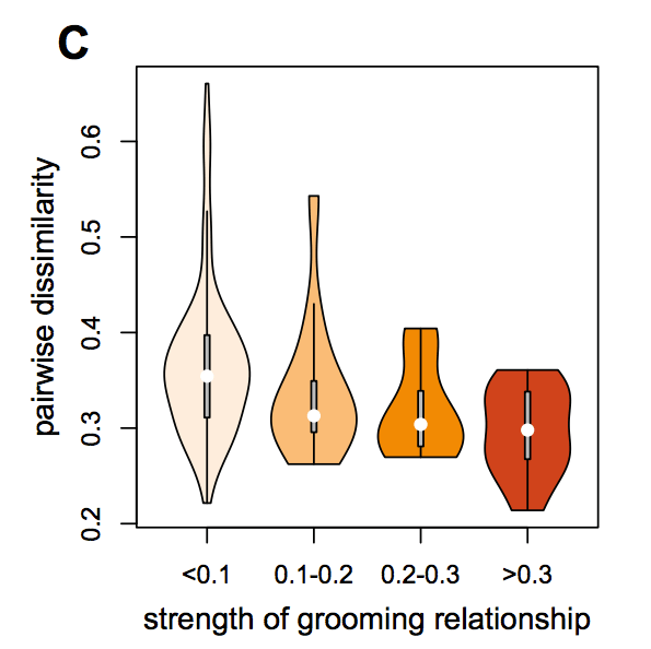 Baboons with stronger grooming relationships had more similar, or less dissimilar, gut microbiomes. (Fig. 2c from Tung et al, 2015)