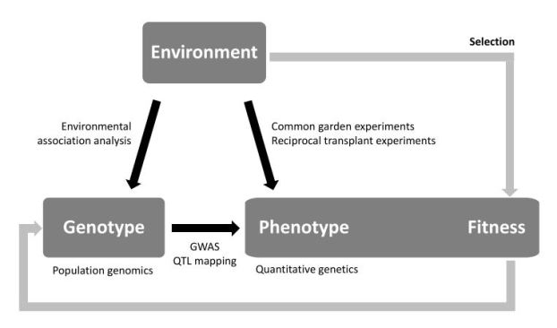 Box 1 from Rellstab et al. (2015) shows the relationships between sources of variation (boxes), the cause and effect of evolutionary processes (black arrows), and selection (gray arrows).