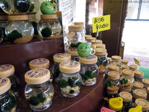 More marimo for sale (yes, I bought one!)