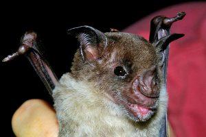 Ugly bat.
