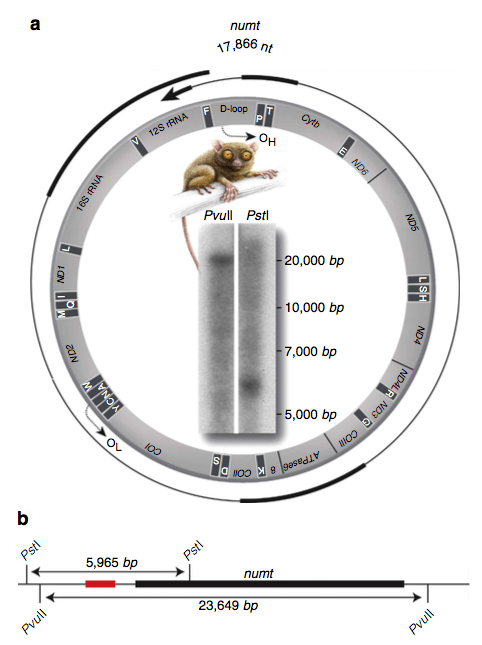 (Schmitz et al. 2016: Figure 4)