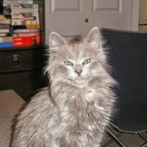 Ashley - My Favorite Cat