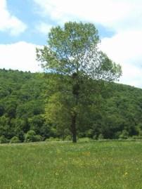 Pescopennataro foto di alberi