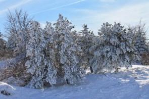 Capracotta Alberi e boschi
