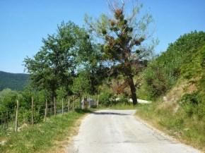 Capracotta -Vischio e Pioppo