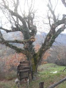 Castelpetroso Frazione di Guasto la quercia e il Calesse