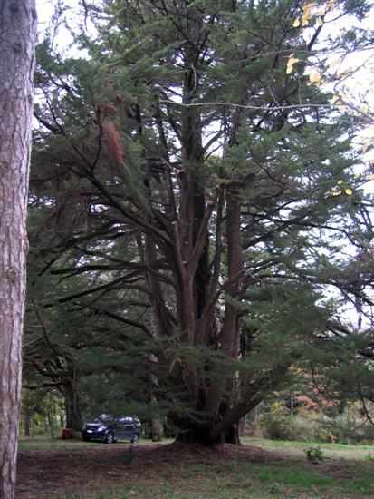 Esemplare unico, più altri 3 Cipressi di oltre 200 anni, Un Cedro del Libano di oltre 200 anni.