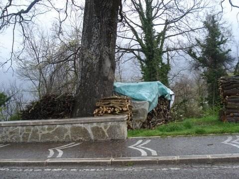 Acquaviva di Isernia La quercia con la legna accatastata