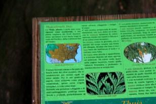 Pannello ad indicare le caratteristiche della thuja Plicata