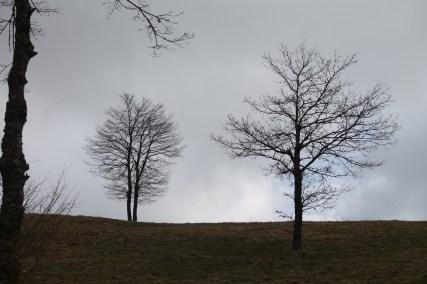 Pietrabbondante alberi