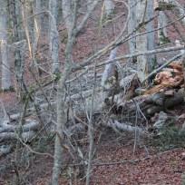 il tronco nella parte più esterna