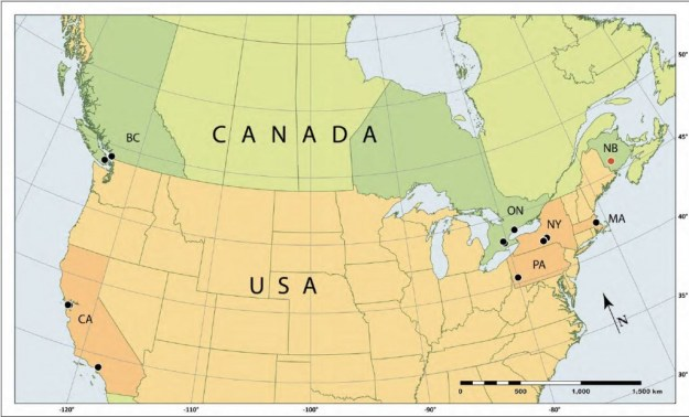 Map of Carychium minimum in North America. The New Brunswick record is represented by a red circle.