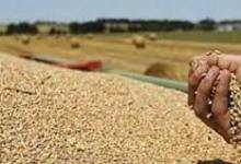 صورة في يوم الغذاء العالمي.. «المركزي للتعبئة والإحصاء»: زيادة نسبية في انتاج مصر من الحبوب