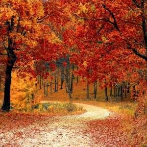 Waarom de herfst leuk is, ook met kinderen