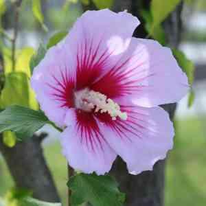 Weinig tot niet giftige planten voor een kindvriendelijke tuin
