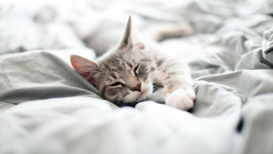 Echt lekker slapen doe je pas onder het juiste dekbed