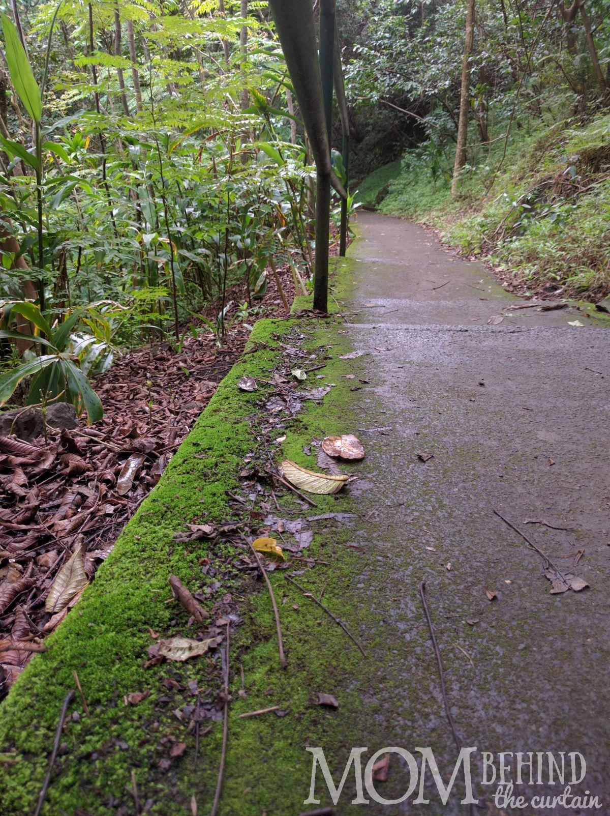 Easy paved walkway on the Iao hike walking trail