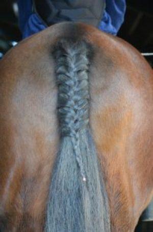 Remington Snap Braid Horses Ass MomCave