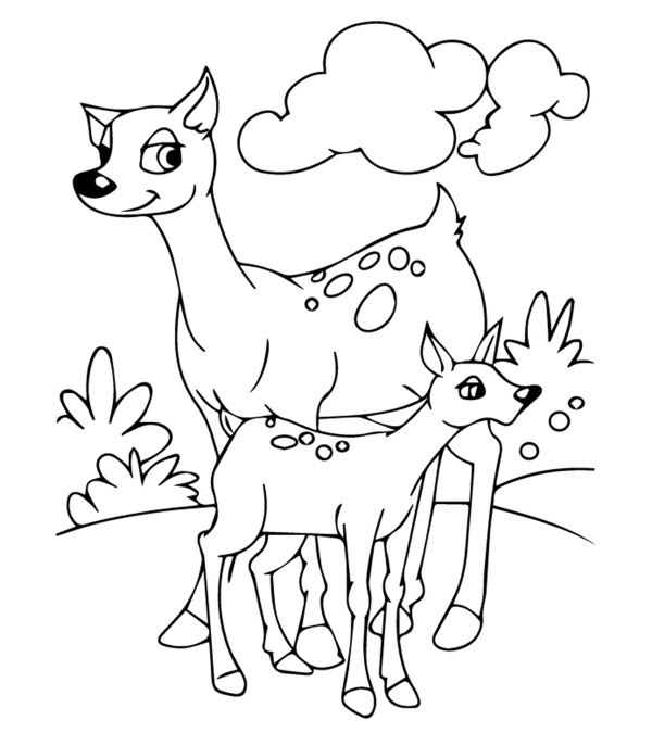 wildlife coloring pages # 1
