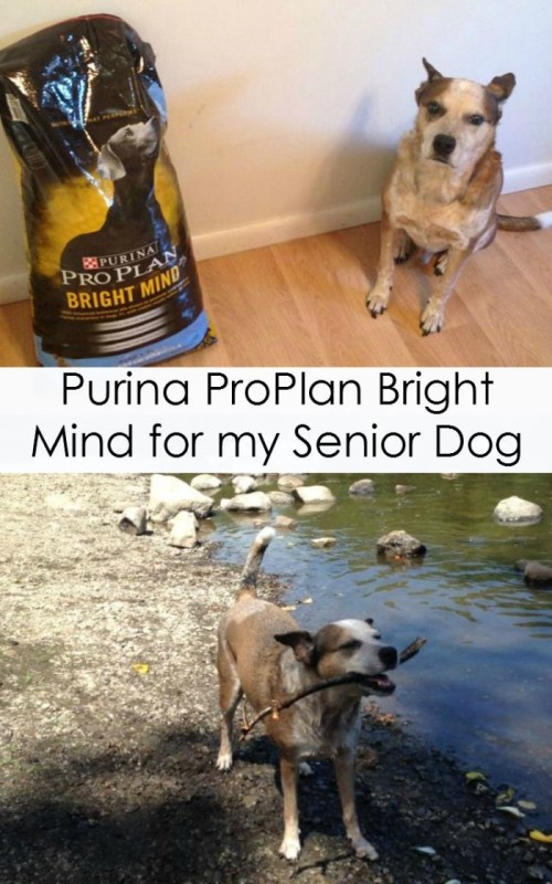 Transitioning my Senior Dog to Purina ProPlan Bright Minds