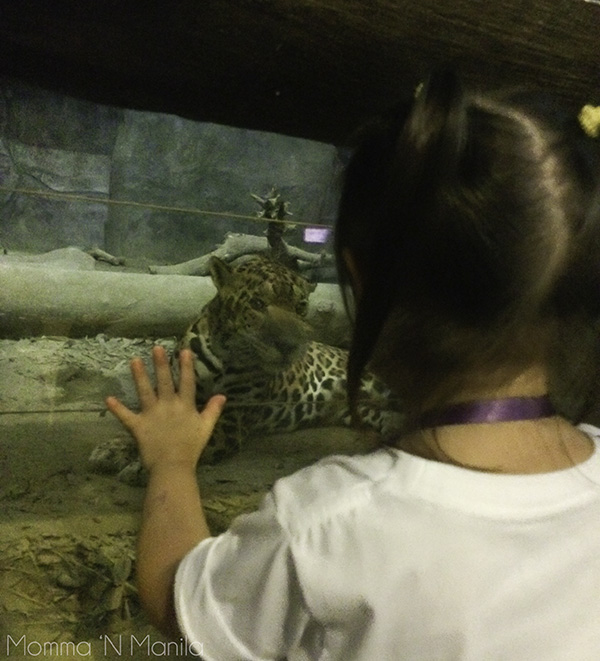 Gelli was mesmerised by the big cats. She  spent a good amount of time watching the different big cats.