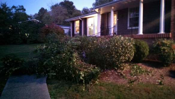 I cut the top off these two shrubs that were hiding the front of the house.