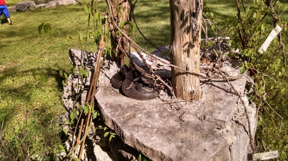 A lovely snake we found sunning itself.