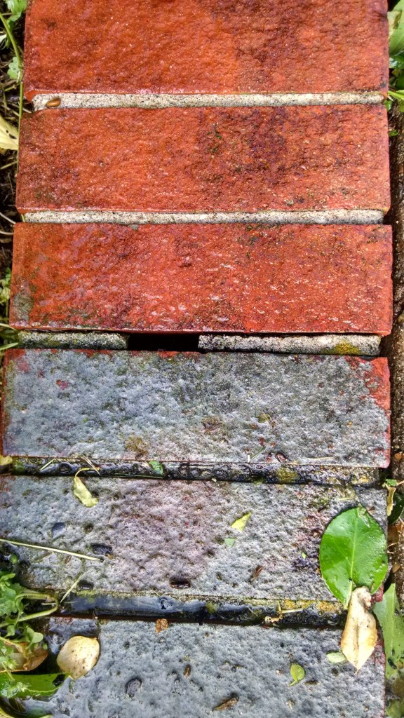 I actually thought this was cement on the bricks...nope.