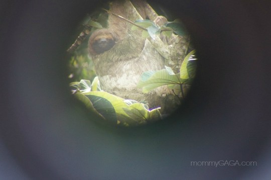 photo of wild sloth in a tree through telescope, Costa Rica