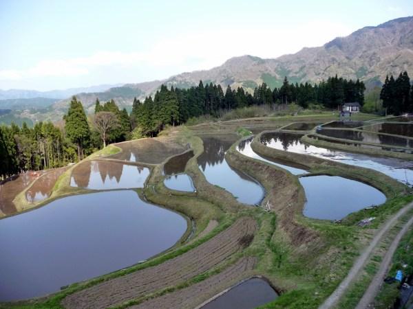 Rice Fields in Japan, Tsunagu Japan