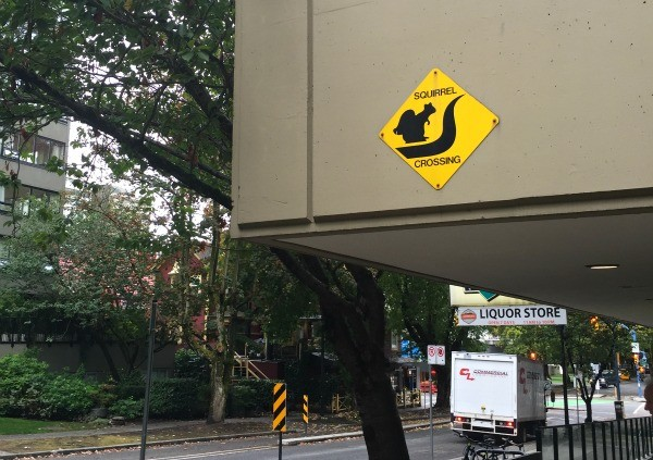 Interesting things I saw in Vancouver BC, Canada, Squirrel crossing sign Comox Street