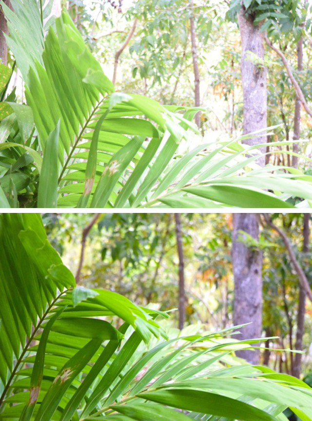 NikonMOMents - before and after fern (The Philippines)