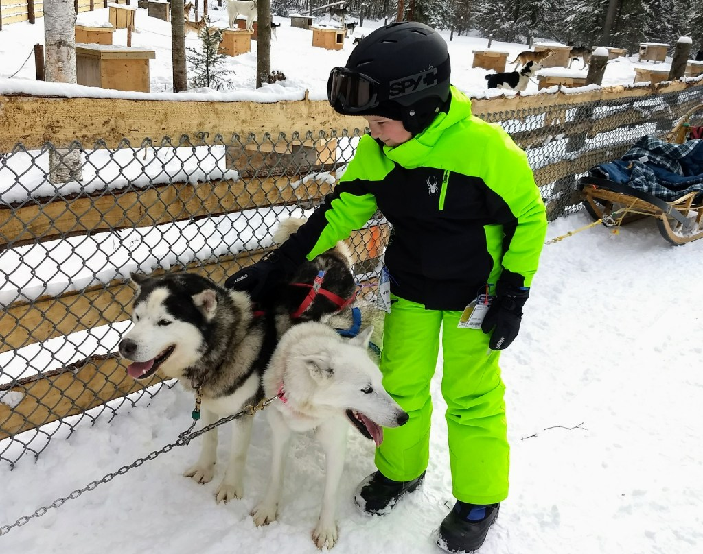Dogsledding in Tremblant