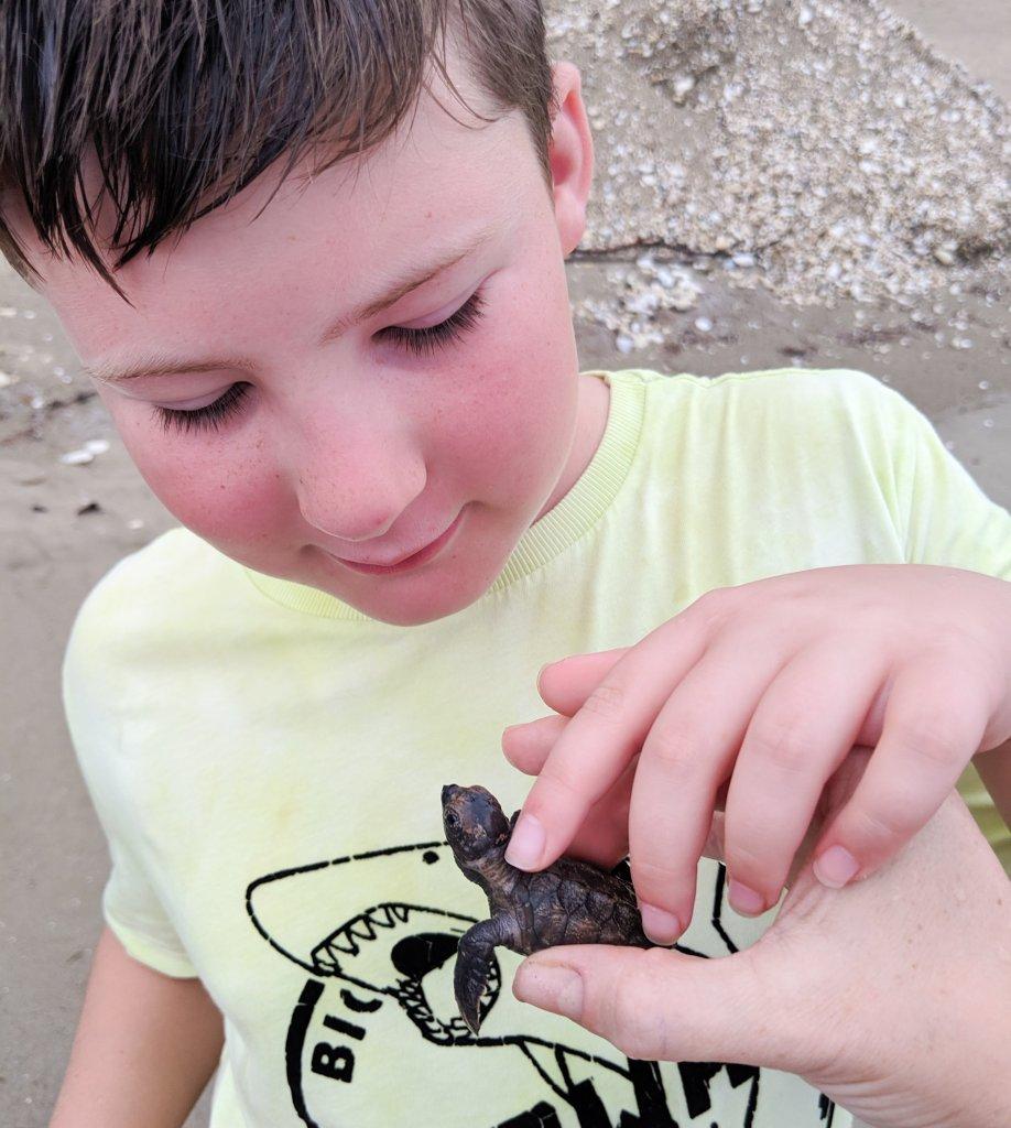 turtle release jamaica
