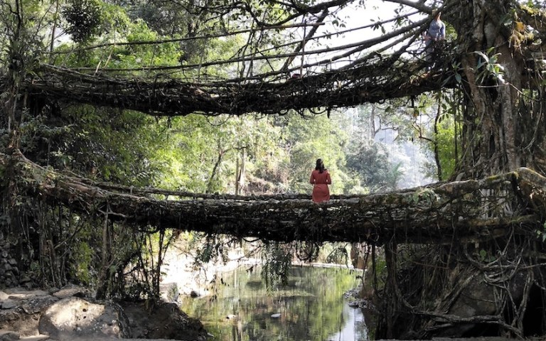 Meghalaya, the North east indian state needs to be added in your bucket list. It is one of the best place for nature lovers, explorers and even for families. Read to know more. #travelIndia #Incredibleinda #explorer #naturelovers #Meghalaya #lakesofIndia #shillong #rootbridge #livingrootbridge